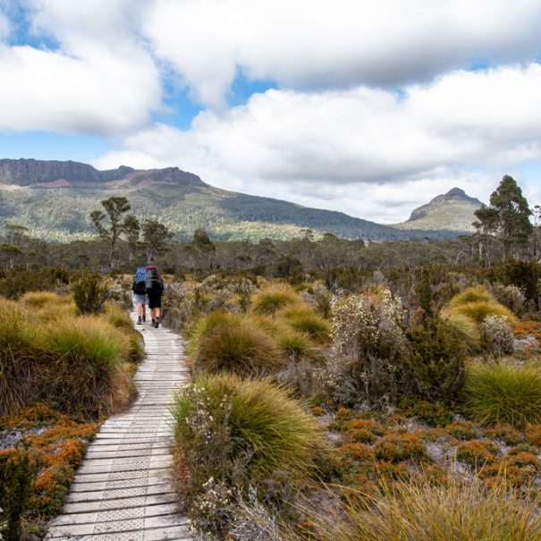 Hikers on the track near Cradle Mountain